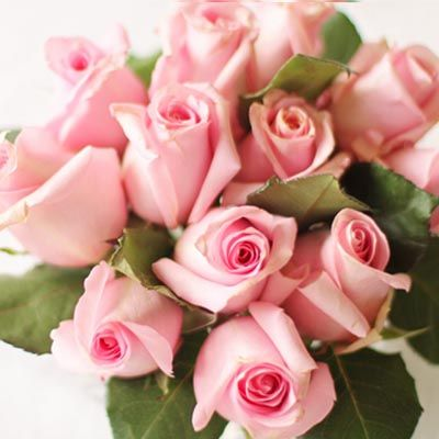 Pink Roses_Bunch